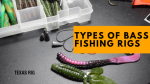 Bass Fishing Rigs Comparision