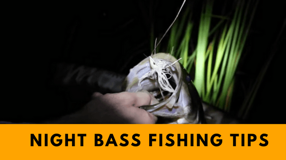 Bass Fishing at Night tips