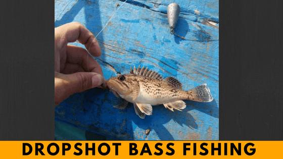 Dropshot fishing
