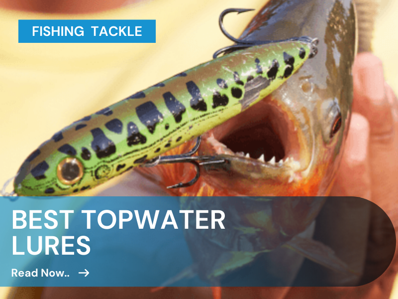 best topwater lures for bass fishing
