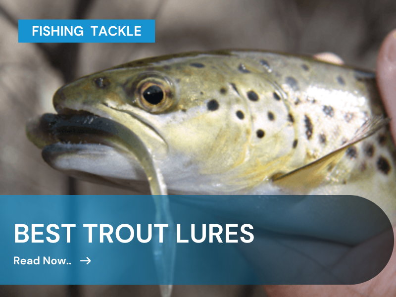 baest trout lures for bass fishing